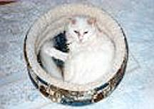 This photo was taken from above a circular cloth pet bed about 15 inches in diameter, whose sides were about 6 inches tall and lined with textured cotton. A friend had given it to us for one of our small dogs. June, who is curled up in it, notified the dog that he was free to use it any time she wasn't around.